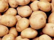 Картофель прордовольственный