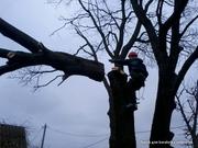 Спилить аварийное,  сухое,  большого диаметра дерево угрожающее зданию.