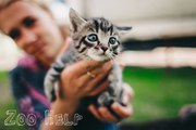 Даром котята-девочки