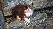 Шикарный котенок в добрые руки!
