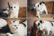 Эдита - душевная кошка для человека с большим сердцем