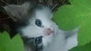 Отдам маленького котенка, СРОЧНО!!!!